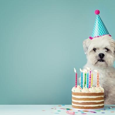 愛犬の記念日を一緒にお祝いDog Anniversary Stay (素泊まり)