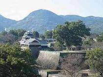 熊本城内の大クス