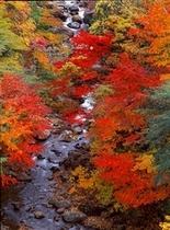 《秋》真っ赤に染まった紅葉