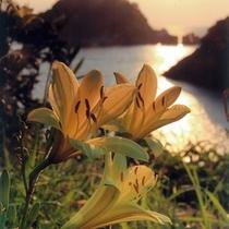 レモンイエローのゆうすげの花