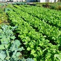 夏は自家農園で沢山の野菜を
