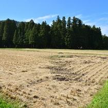 刈り取り後の自家の田んぼ