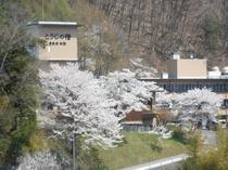 ◆桜館鹿教湯の春