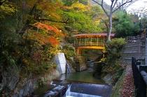 五台橋(紅葉)