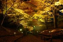 上田城けやき並木紅葉まつりライトアップ