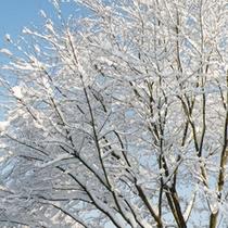 冬・雪景色-樹木