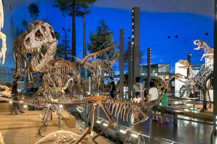 福井県立博物館常設展観覧券付プラン☆福井県が誇る施設、お車で約60分です