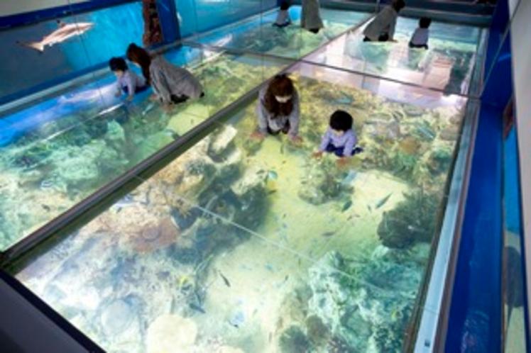 越前松島水族館チケット付プラン