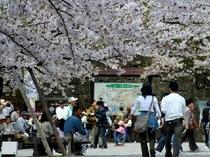会津鶴ヶ城の桜