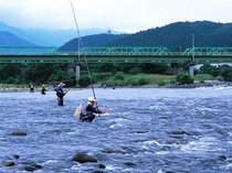 九頭竜川の鮎釣り