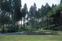 金津創作の森