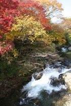 秋の五百川の渓谷