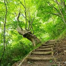 磐梯熱海温泉 ケヤキの森