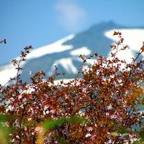 周辺景色(春)