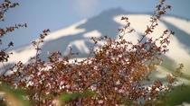 *【周辺景色】(春)