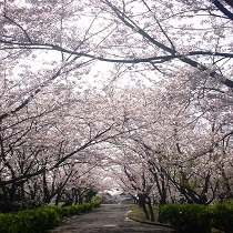 ★ときわ公園の桜★日本のさくら名所100選にもえらばれている、景観の美しい総合公園です。