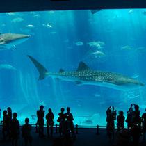 巨大ジンベイザメやサンゴの海など見どころ満載の沖縄県一の水族館★