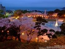 函館公園・桜