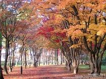 香雪園  紅葉
