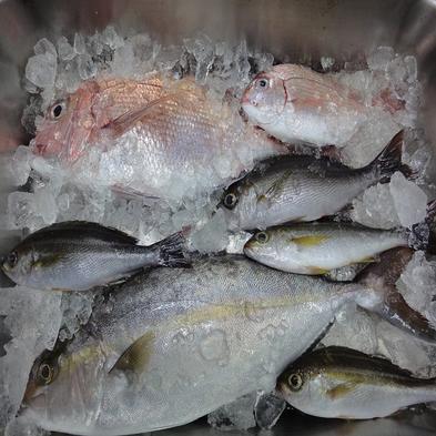 【獲りたて新鮮!】定置網漁から獲りたて地魚プラン