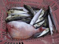 定置網 魚