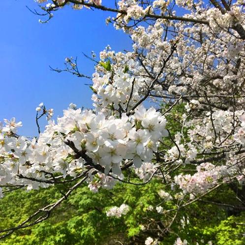 【庭園の風景】