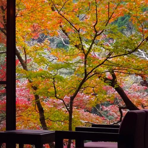 紅葉時期の客室眺望