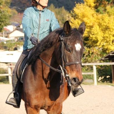 【乗馬体験プラン】馬に乗って触ってリフレッシュ★伊豆の自然と馬の優しさに癒されます★1泊2食付