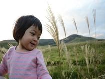 稲取 細野高原