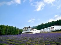 【外観】当館の前に広がる「ラベンダーの森」は、富良野市内一大きなラベンダー畑です。