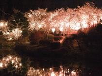 しょうばら上野公園の桜