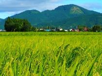 大館といえば日本最大級の大文字を擁する鳳凰山とおいしいお米!当館ではどちらもお楽しみいただけます!!