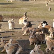 大久野島 うさぎのお出迎え 提供:広島県