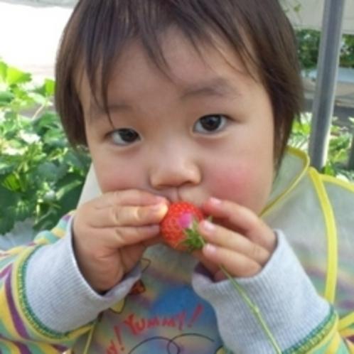 お子様も大喜びの甘〜いイチゴが食べ放題!ママ〜美味しいね♪