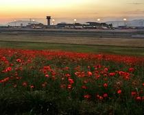 高松空港からの景色
