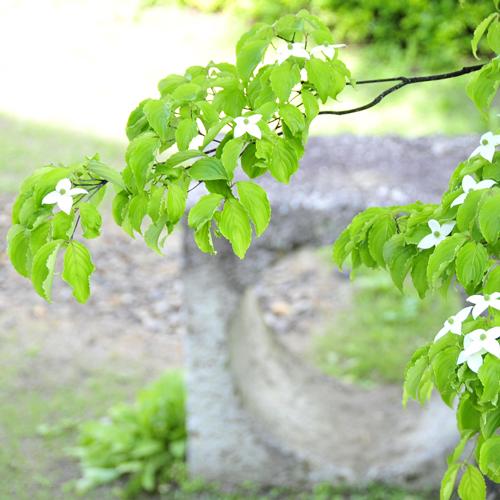 大自然に囲まれた中庭