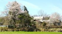 ・春の外観~桜と花ももに彩られて~