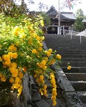 西国28番札所 成相寺