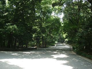 最近は散歩がてら歩いて行かれる方も多くいらっしゃいます。明治神宮の広大な森