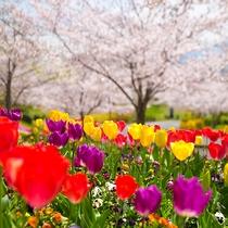◆春の風景◆