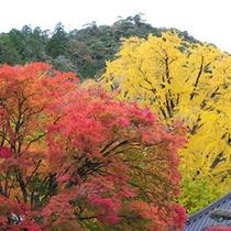 【大窪寺の大銀杏】自然の織りなす芸術を心ゆくまで・・・。
