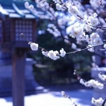 春の白山神社【写真提供:公益財団法人新潟県観光協会】