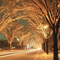 冬のイルミネーション【写真提供:公益財団法人新潟県観光協会】
