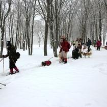 周辺_たくさん雪が積もるので、たっぷりウィンタースポーツを楽しめます (2)
