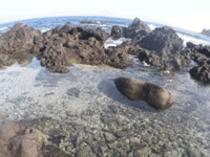 磯遊び:目の前の海ではもちろん無料です。有料アクティビティーもあります