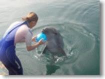 イルカ:触れ合いや餌やり体験で癒されます