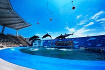 水族館 2
