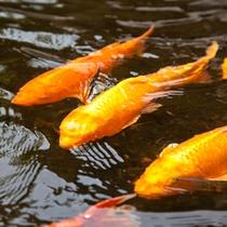 館内イメージ:鯉