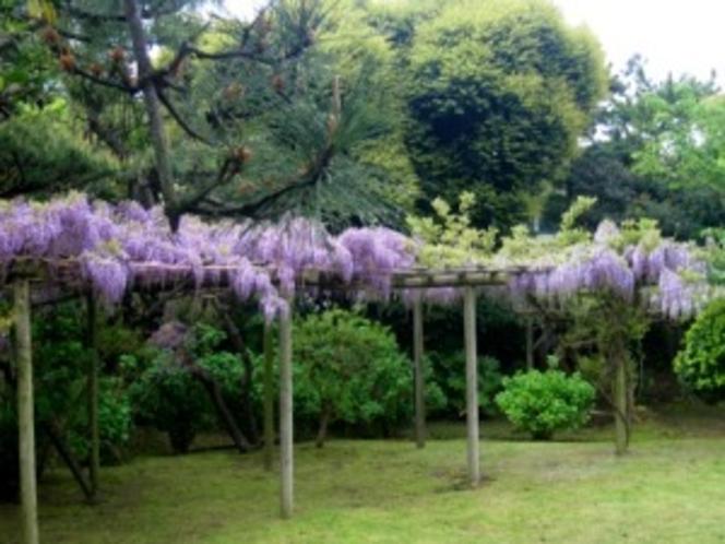 松汀園の庭「藤棚」