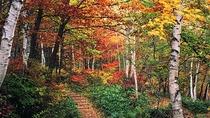 【秋】遊歩道の紅葉 10月中旬・・・敷地内にある遊歩道の紅葉です。